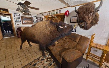 Под одной крышей с бизоном
