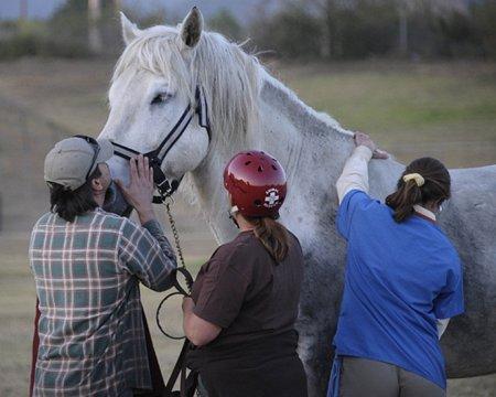Спасение застрявшей в грязи лошади