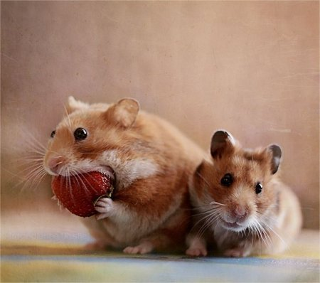 Смешные и забавные животные (25 фото)