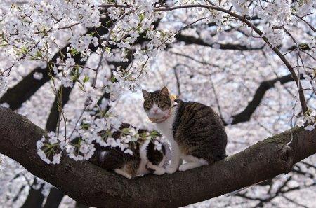 Японские бездомные кошки