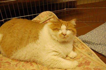 Очень толстый кот Гарфилд