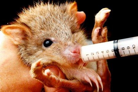 Самая очаровательная крыса в мире
