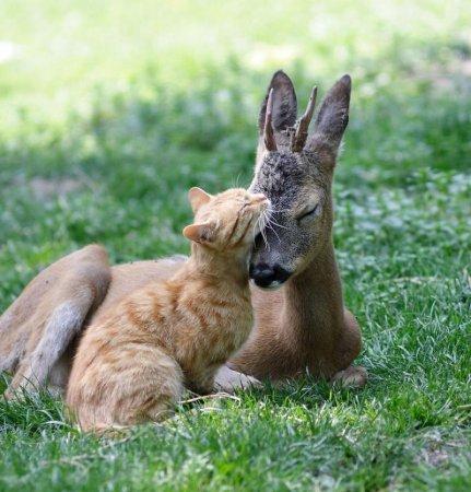 Смешные и забавные животные (40 фото)