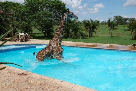 Жираф решил искупаться