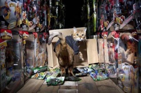 Кот получил работу охранника игрушек