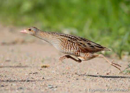 Фотоконкурс World Bird 2012
