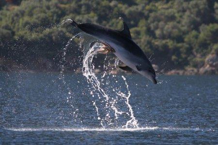 Дельфин и похотливый осьминог