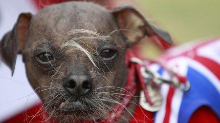 """Названа """"самая уродливая собака в мире"""""""