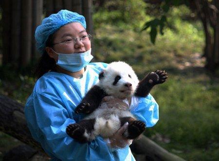 Маленькие панды очаровали весь мир!