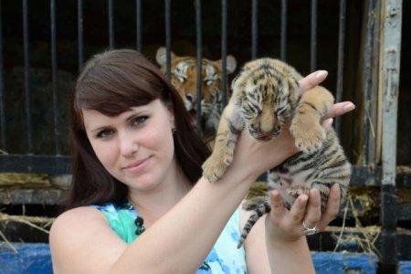 В передвижном зоопарке появились на свет три амурских тигренка