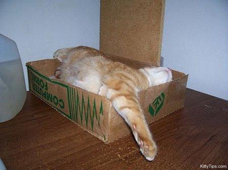 Самые разнообразные кошачьи позы для сна