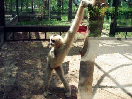 Смешные и забавные животные (44 фото)