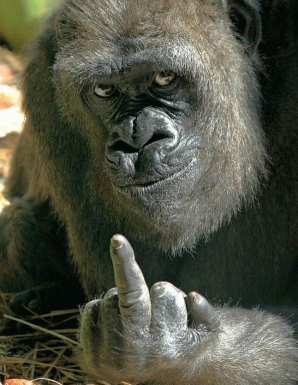 Ученые сделали интересное открытие о шимпанзе