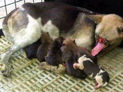 Жители Филиппин спасают изувеченную собаку-героя
