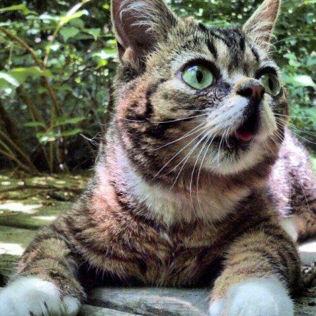 Кошка Little Bub - звезда Facebook