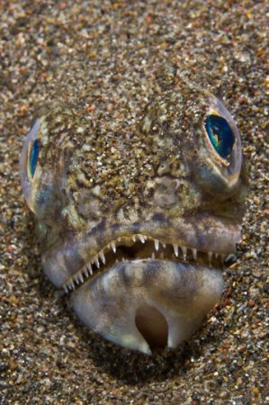 Участники конкурса подводной фотографии 2011-12