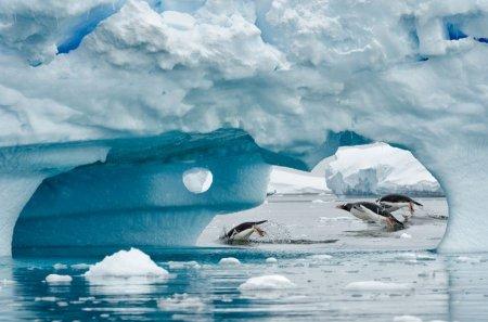 Обитатели Антарктиды в фотографиях Kyle Anstey