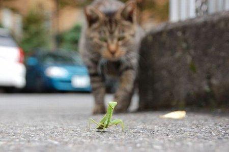 Мгновения из жизни кошек