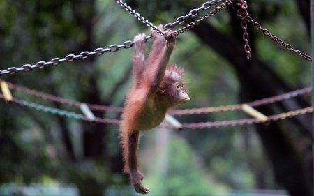 Животные в фотографиях за неделю (21 шт)