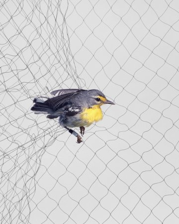 Птицы, попавшие в сети