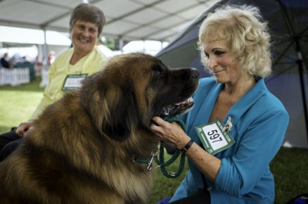 Собаки на выставке «Windsor Championship Dog Show»