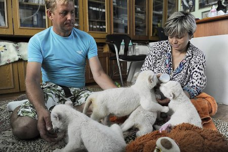 Белые львята из зоопарков Украины