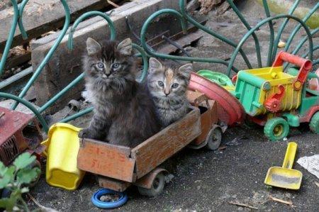 Занимательная жизнь котят