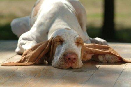 Эти смешные и милые собаки