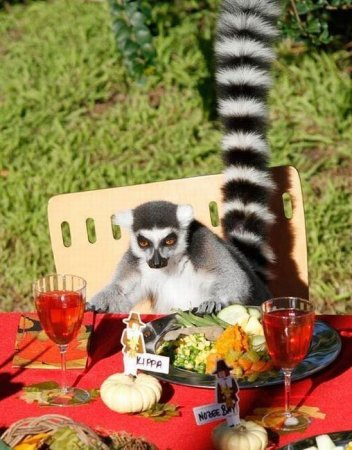 Смешные и забавные животные (29 фото)