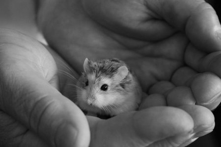 Совсем крошечные животные