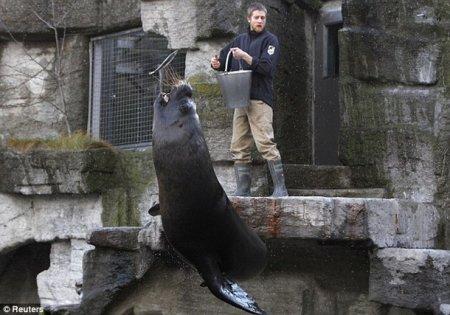 Обнимашки с морскими львами