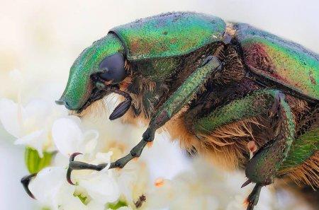Удивительные макро-фотографии насекомых