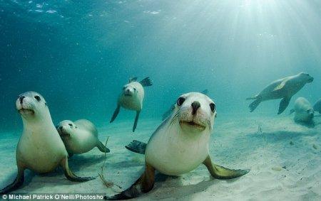 Подводная фотосессия морских львов
