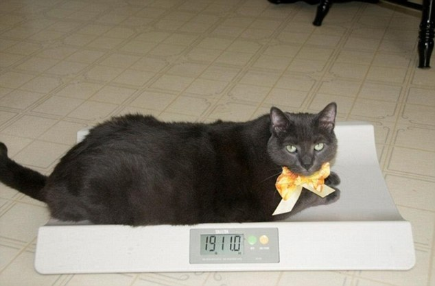 Жирные коты похудели