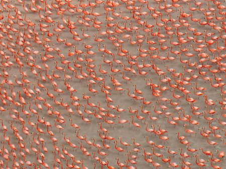 Лучшие фотографии животных от National Geographic (25 фото)