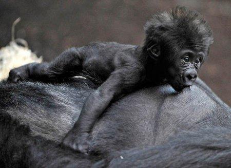 Детеныши животных (35 фото)