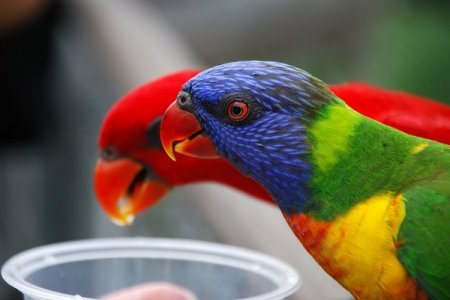 Самые яркие птицы на нашей планете
