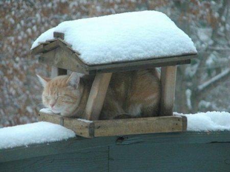 Кошачья жизнь в фотографиях (22 фото)