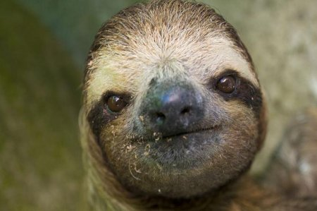 Убежище для ленивцев в Коста-Рике