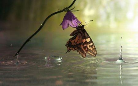 Макрофотографии улиток и насекомых под дождем