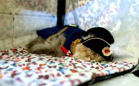 """""""Гламурный"""" юбилей кошки Матильды"""