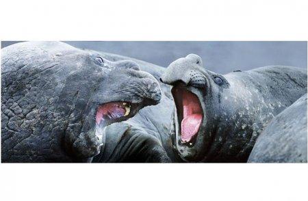 Борьба за выживание среди диких животных