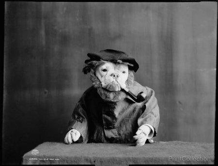 Ретро-фото животных