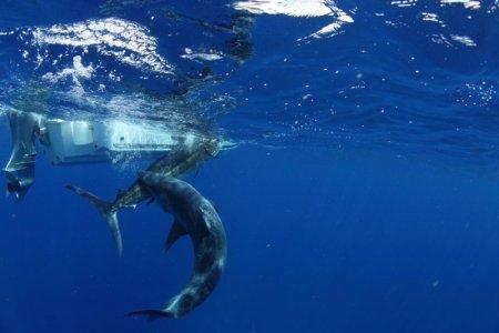 Неожиданный сюрприз от акулы