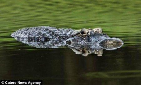 Крокодил - рыболов