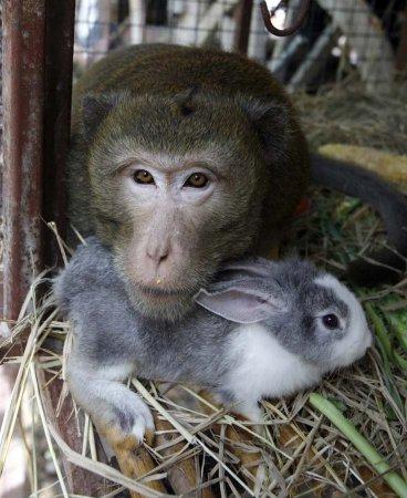 Самые необычные парочки животных