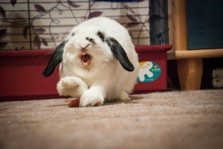 Смешные и забавные зверюшки (19 фото)