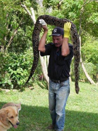 Собака спасла хозяев от огромного питона