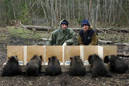 Медвежьи спасатели