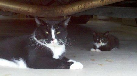 Маленькие двойники взрослых животных